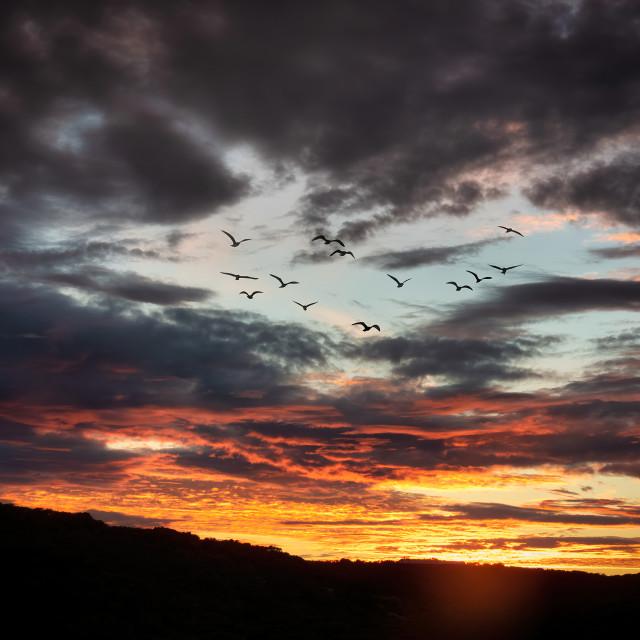 """Sunset Flock"" stock image"