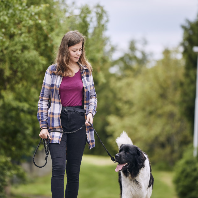 """""""Young girl walking with her dog on pet leash"""" stock image"""