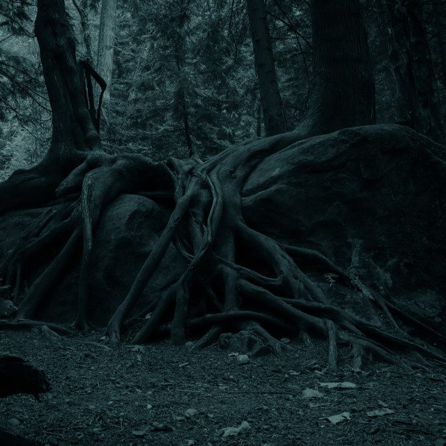 """Creepy tree"" stock image"