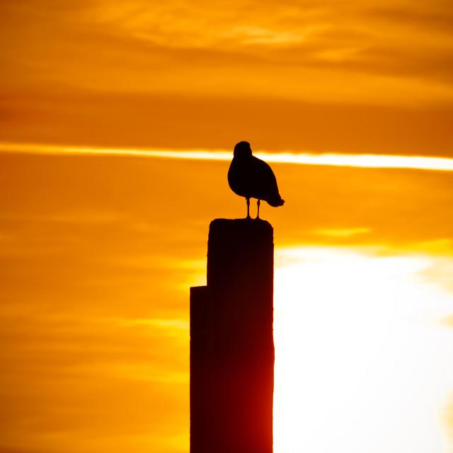 """""""Mesmerizing sunset"""" stock image"""