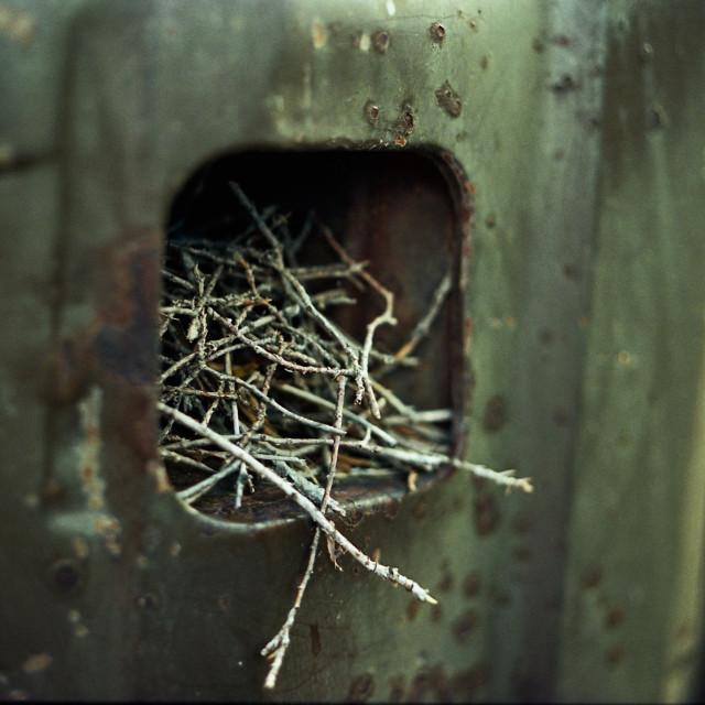 """Taillight Nest"" stock image"