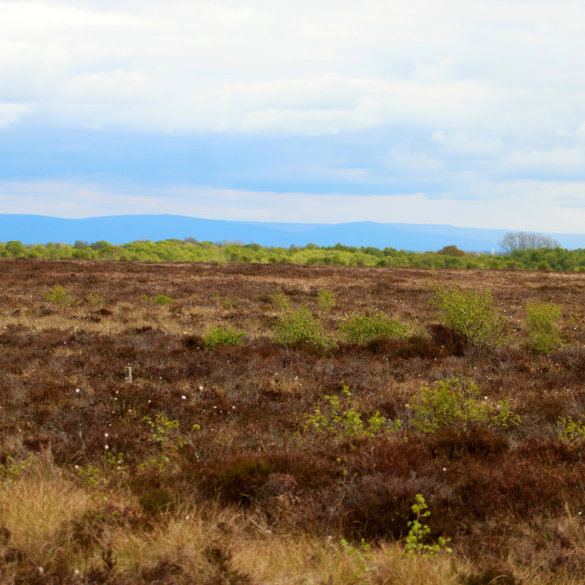 """""""Glasson Moss National Nature Reserve"""" stock image"""