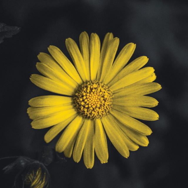 """Sunshine vs2"" stock image"
