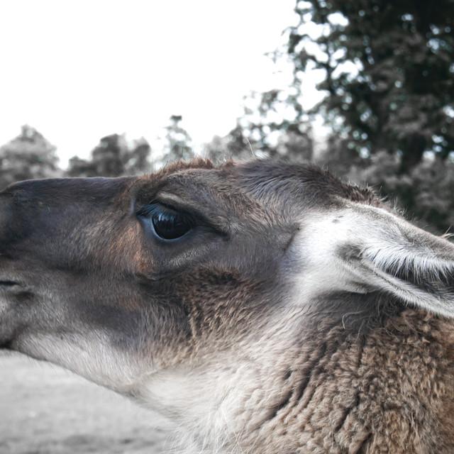 """The Animal Park"" stock image"