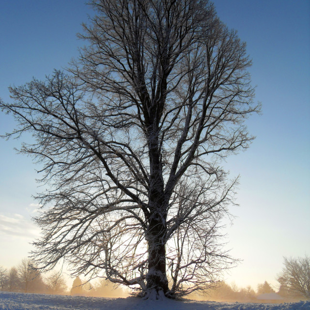 """Winter sun rise"" stock image"