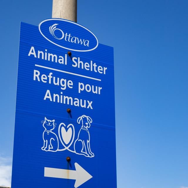 """""""City of Ottawa Animal Shelter sign"""" stock image"""
