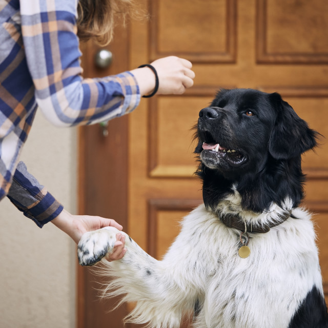 """""""Dog giving paw her pet owner"""" stock image"""