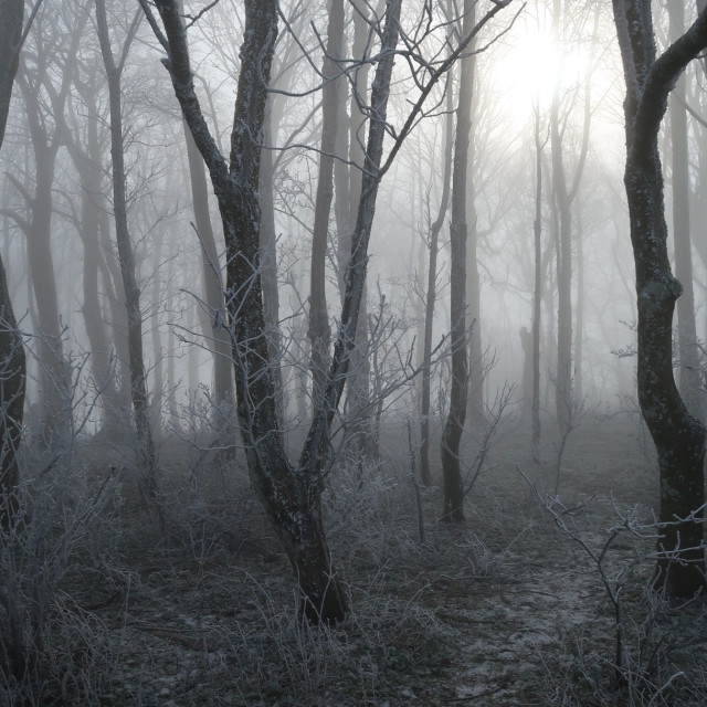 """""""Frost covered trees on Devils Dyke in Sussex, England."""" stock image"""