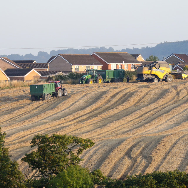 """""""Harvest time on Etherley Moor"""" stock image"""