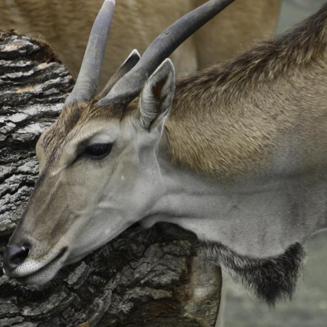"""""""The Safari"""" stock image"""