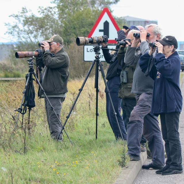 """Birders watching Great White Egret"" stock image"