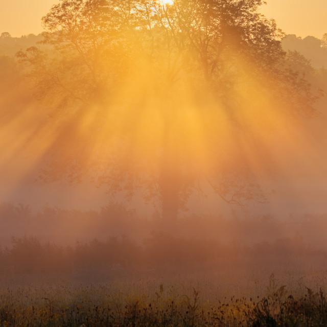 """""""Mist Illumination"""" stock image"""