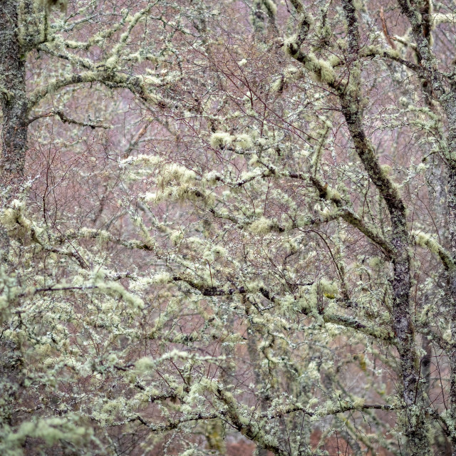 """""""Trees Abstract"""" stock image"""