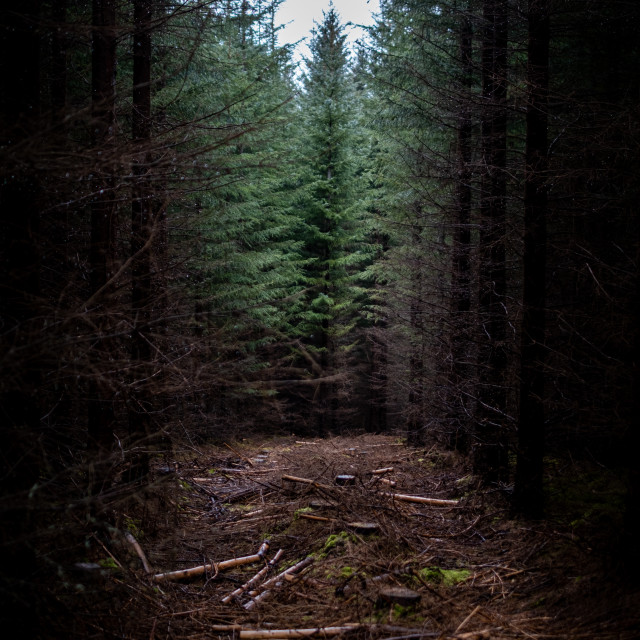 """""""Gap in the woods"""" stock image"""