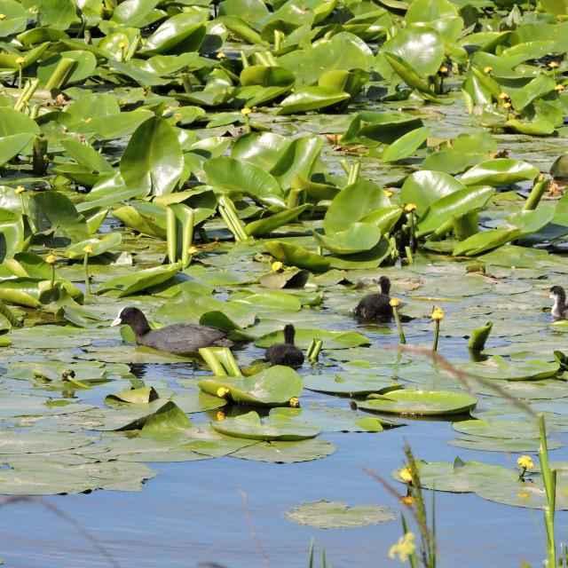 """RSPB Middleton Lakes - 2019"" stock image"