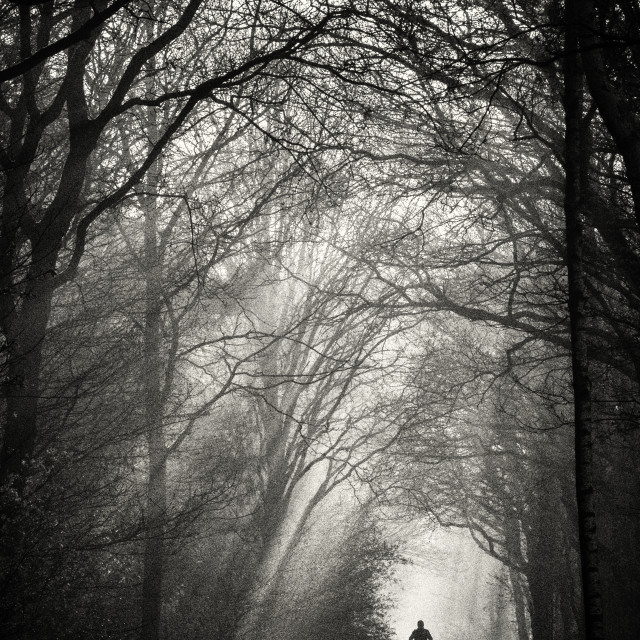 """""""Cyclist in a foggy forest"""" stock image"""