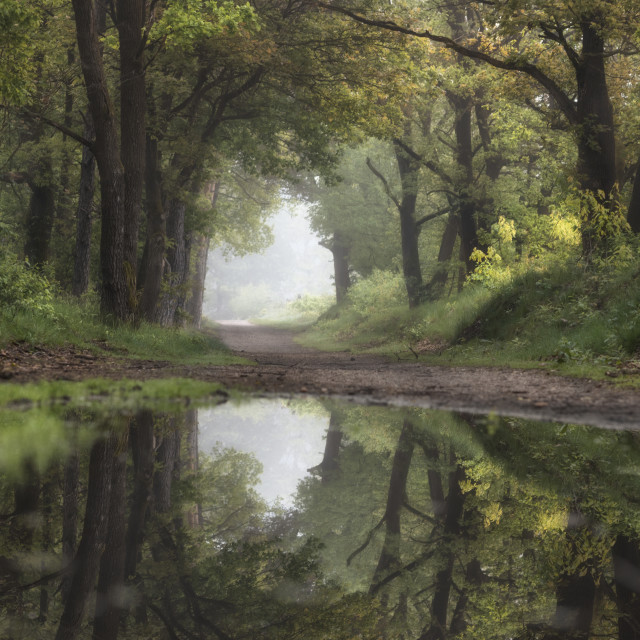 """""""Summer forest reflection"""" stock image"""