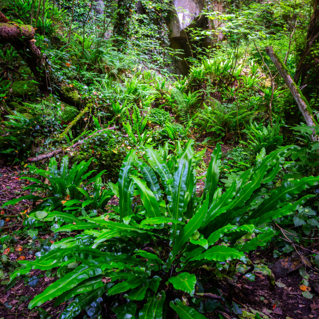 """""""Beautiful green leaves on the forest , like as jungle"""" stock image"""