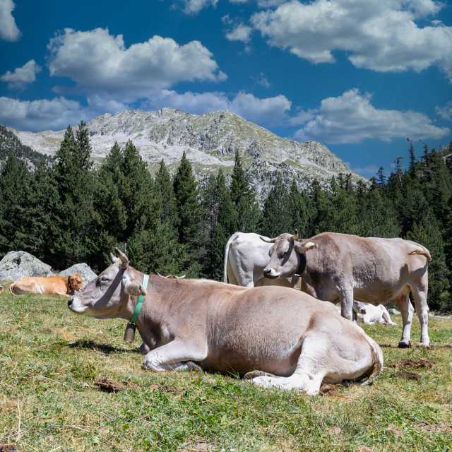 """""""The beautiful Aiguestortes i Estany de Sant Maurici National Park of the Spanish Pyrenees mountain in Catalonia"""" stock image"""