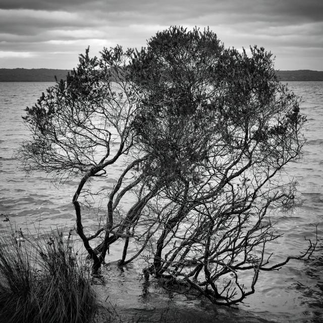"""""""Cove Tree"""" stock image"""