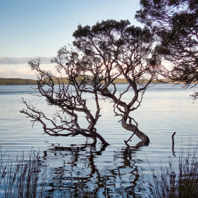 """""""Tree at the Cove II"""" stock image"""