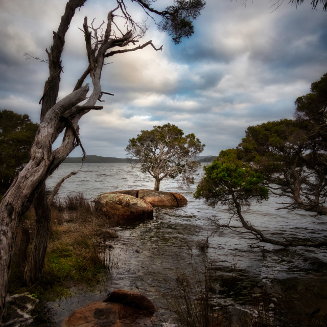 """""""Trees at the Cove"""" stock image"""