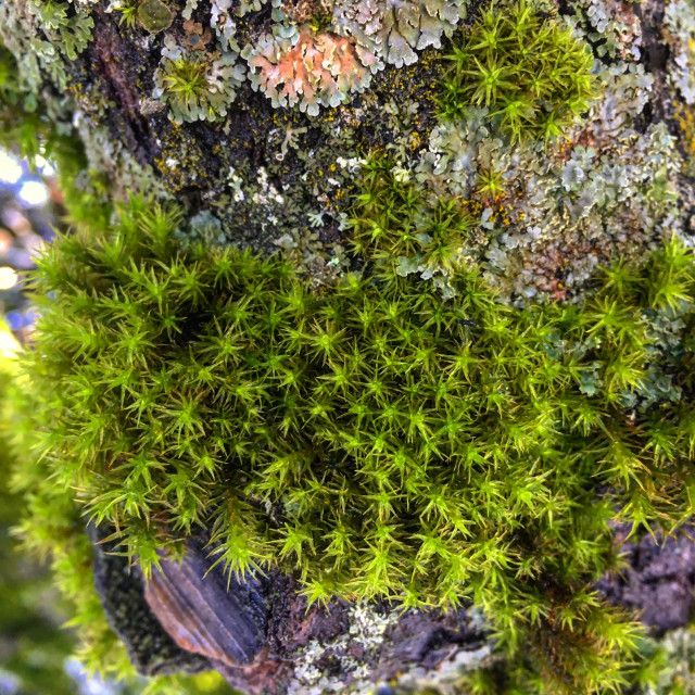 """""""Moss on a Knot"""" stock image"""