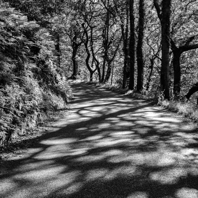 """""""Forest Road"""" stock image"""