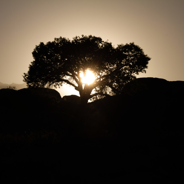 """Backlit lone tree in the desert"" stock image"