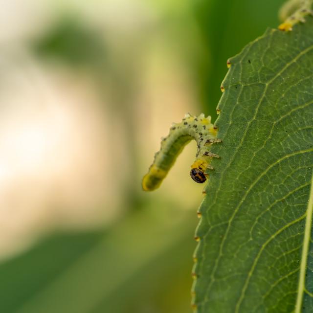 """""""Caterpillar."""" stock image"""