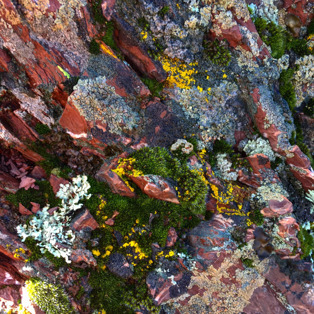 """Moss on Rock"" stock image"