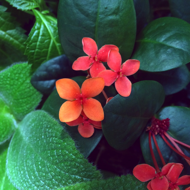 """""""Tropical Flowers"""" stock image"""