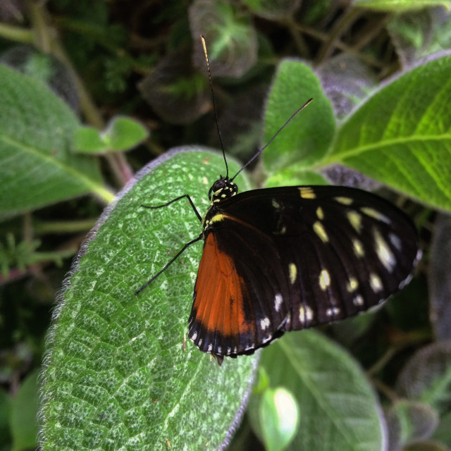 """""""Spotted Butterfly"""" stock image"""