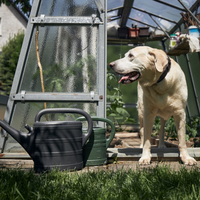"""""""Curious dog on garden of house"""" stock image"""
