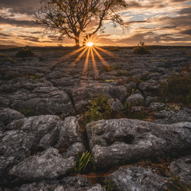 """""""The Crack Of Dawn"""" stock image"""
