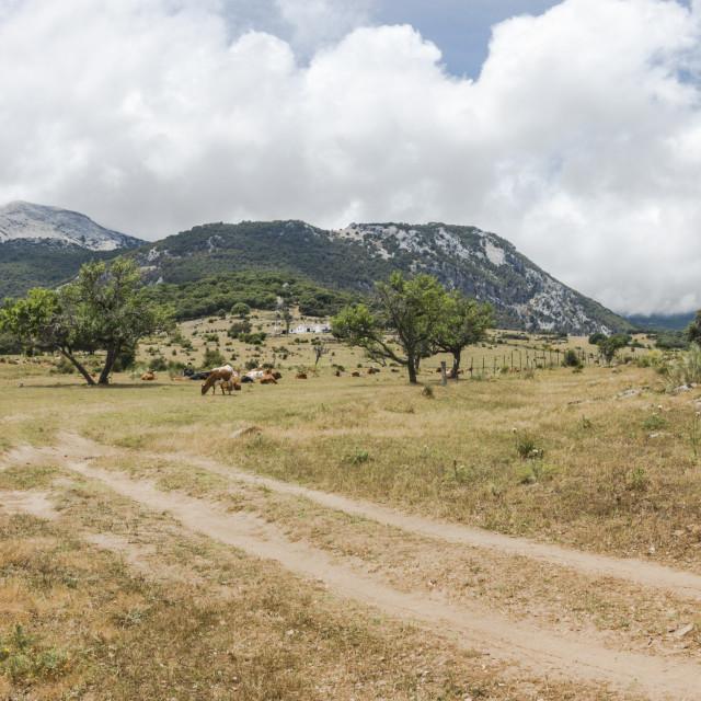 """Rio Campobuche, Natural park Grazalema, reserve, Andalusia, Spain."" stock image"