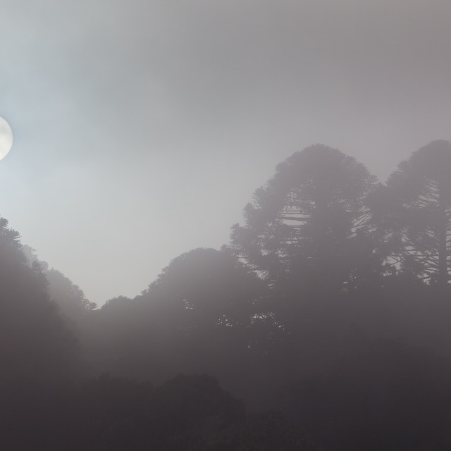 """""""misty morning in the mountains"""" stock image"""