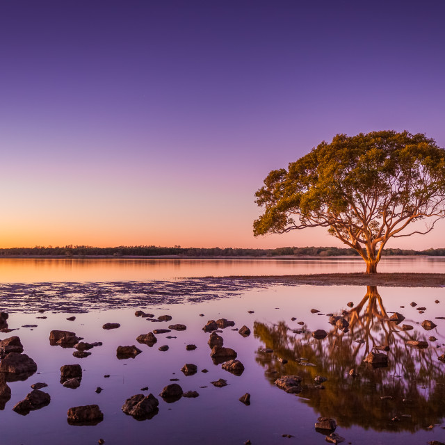 """""""Lone tree in the sea"""" stock image"""