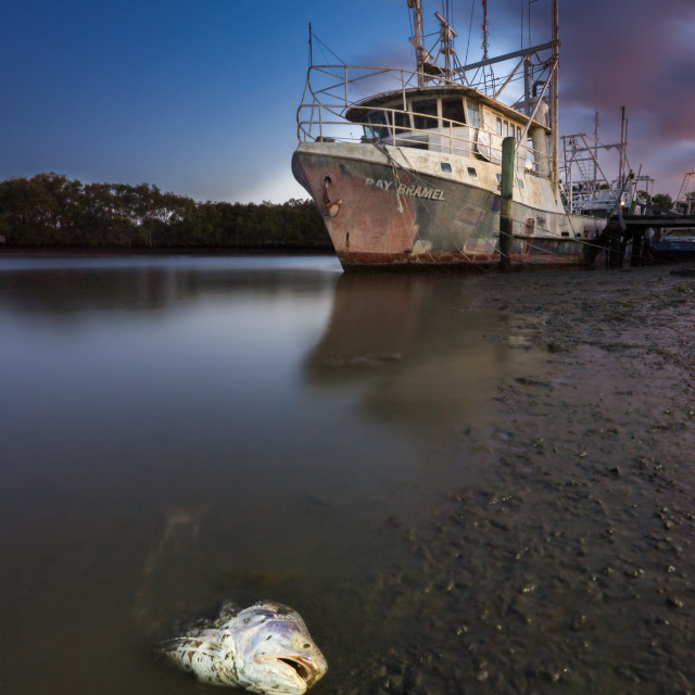 """""""Old Trawler in the sunrise with dead fish"""" stock image"""