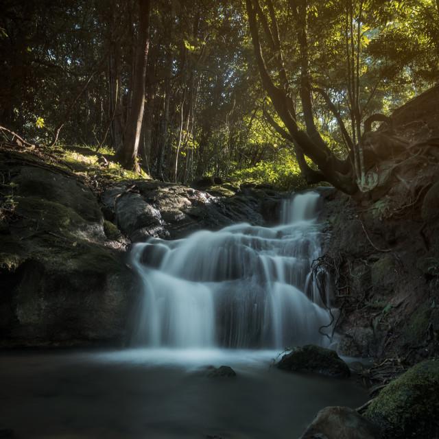 """""""Photo walk at Whian Whian Falls image #1"""" stock image"""