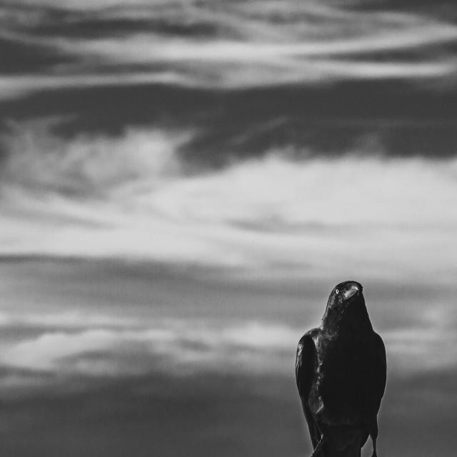 """Crow next to the sea"" stock image"