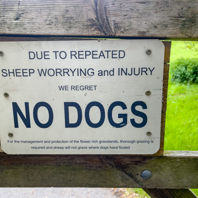 """""""Warning Sign, No Dogs, Richmond, Yorkshire."""" stock image"""
