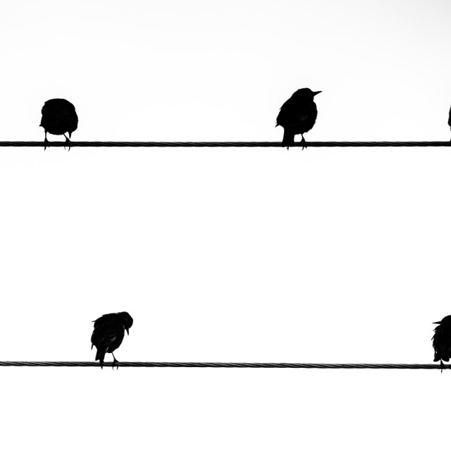 """""""The Starling Line."""" stock image"""