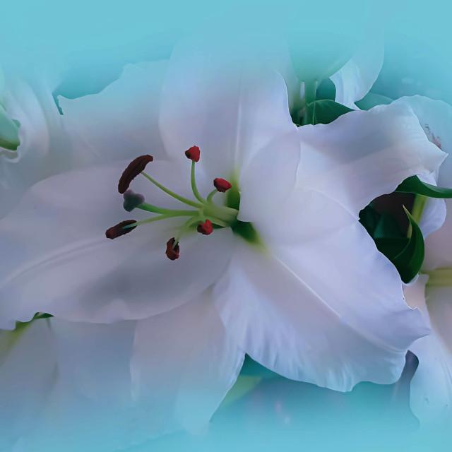 """Beautiful White Lilies"" stock image"