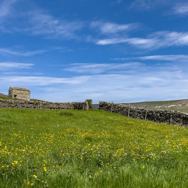 """Swaledale Wild Flower Meadow and Field Barn."" stock image"