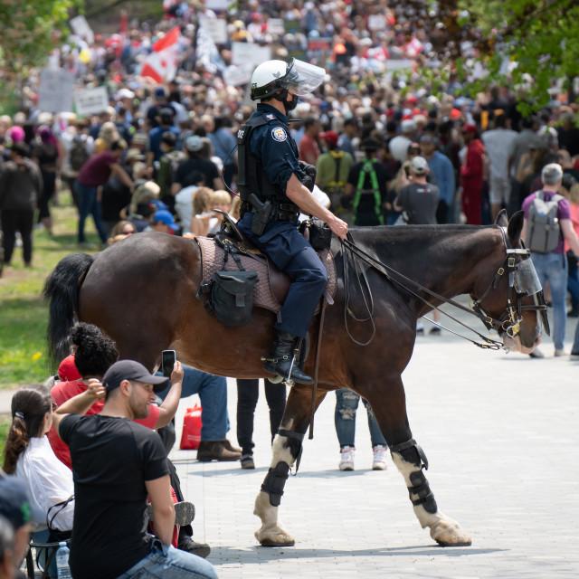 """Police Horse Walking Through Crowd, Toronto, ON"" stock image"