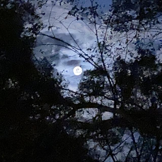 """Summer Moon"" stock image"