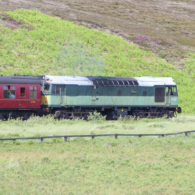"""D7628 at Fen Bog"" stock image"