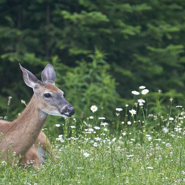 """Oh Deer!"" stock image"