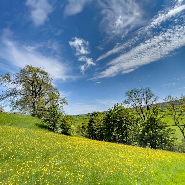 """""""Swaledale Wild Flower Meadow near Reeth."""" stock image"""